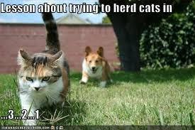 Herding Cats Meme - image herding cats thanks marci b toooo funny pinterest