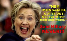 Monsanto Vanity Fair Hillary U0027s Unyielding Monsanto Loyalty Actually Reveals Several Red