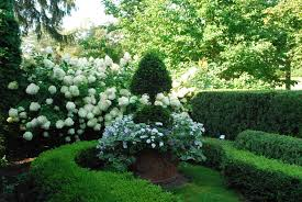 Outdoor Topiary Trees With Lights Topiary Plants Dirt Simple