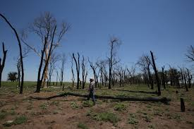 Family Crisis Center Garden City Ks Ranchers Healing After Kansas U0027 Largest Wildfire News The