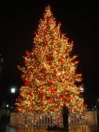 beautiful outdoor trees happy holidays for