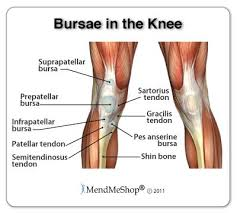 3d Knee Anatomy 25 Best Anatomy Of The Knee Ideas On Pinterest What Does Bum