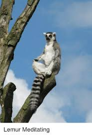 Lemur Meme - lemur meditating lemur meme on me me