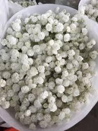 Baby S Breath Flower Baby U0027s Breath Flower Gypsophila 10 On Sale Cheap Baby U0027s Breath