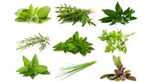 plante aromatique cuisine les aromatiques au jardin cuisine et bienfaits bien être au