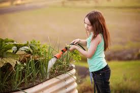 innovative watering vegetable garden how often water vegetable