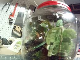 sealed terrarium 5 steps with pictures