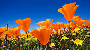 spring flowers background wallpaper all backgrounds are