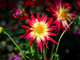Breezewood Gardens Chagrin Falls - beautiful annual flowers breezewood gardens