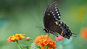 what does a butterfly symbolize reference com
