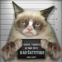 Funny Grumpy Cat Memes - 10 funny grumpy cat memes