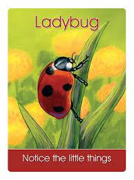 25 ladybug says u201cnotice the little things u201d earth magic