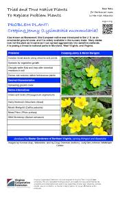 virginia native plants list problem plant creeping jenny master gardeners of northern virginia