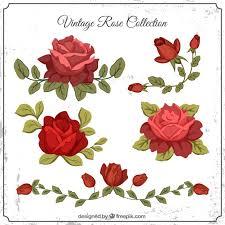 imagenes de rosas vintage set de rosas vintage con hojas descargar vectores gratis