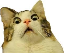 Scared Cat Meme - troll trolling cat meme scared freaked surprised freeto