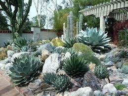 Cactus Garden Ideas Cactus Garden Ideas Landscape Mreza Club