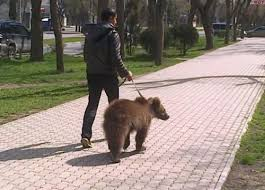 Patient Bear Meme - don t mind me just walking my fucking bear meme by