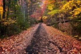 autumn u003d perfect lopifit conditions u2013 lopifitus