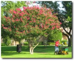 Flowers In Denton - denton tx lawn treatment services granulawn inc north texas