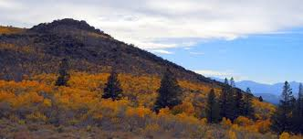 fall colors exploding sage hen mono county tourism