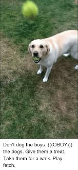 T Dog Meme - don t dog the boys oboy the dogs give them a treat take them for a