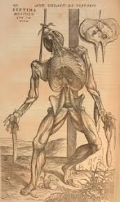 He Made Accurate Drawings Of The Human Anatomy Andreas Vesalius And The Challenge To Galen St John U0027s College