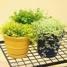 fantastic foliage houseplants houseplants ground covering and