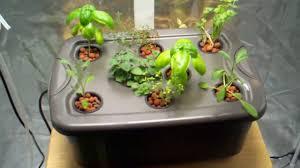 hydroponic herb garden gardening ideas