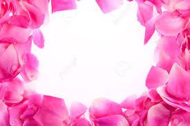Rose Petals Frame Of Pink Rose Petals Stock Photo Picture And Royalty Free