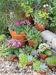 Summer Garden Plants - the decorated house summer gardening and succulents