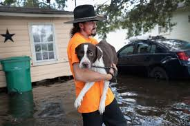 after harvey rescues and reunions of owners and their pets the