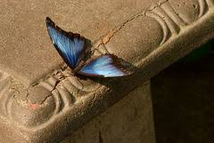 Butterfly Bench Butterfly Bench Stock Image Image Of Sensory Outside 44500123