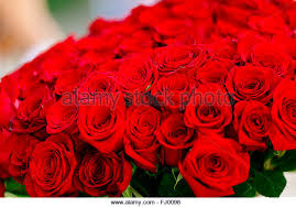 big bouquet of roses big roses bouquet stock photos big roses bouquet stock