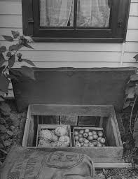 farmers storing garden crops in a window pictures getty images