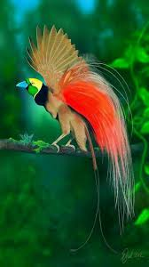 best 25 bird of paradise ideas on pinterest pretty birds