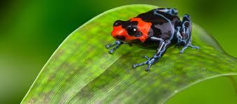 poison dart frogs reid park zoo