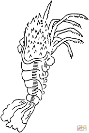 spiny lobster coloring page free printable coloring pages