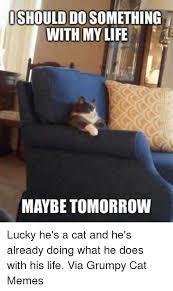 Grumpy Cat Meme Images - 25 best memes about grumpy cat meme grumpy cat memes