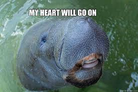 My Heart Will Go On Meme - my heart will go on manateen cleaves quickmeme