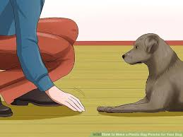 How To Make A Rug From Plastic Grocery Bags How To Make A Plastic Bag Poncho For Your Dog 8 Steps