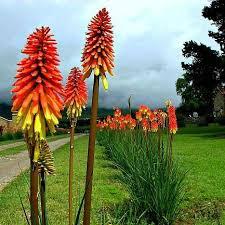 best 25 desert plants ideas on pinterest arizona landscaping