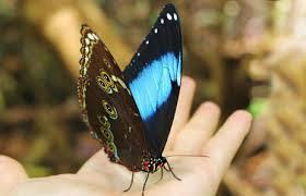 amazon rainforest butterflies photos info thinkjungle com