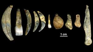 neandertals made their own jewelry new method confirms science