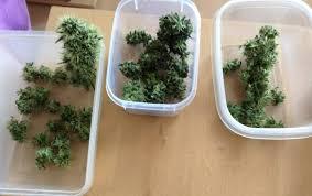 cfl grow light fixture marijuana grow lights the secret truth about led or hps ls
