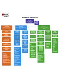 free template for organizational chart human resources organizational chart 6 free templates in pdf human resources organizational chart example