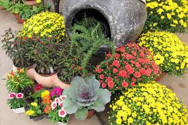 plants and pots on the sunshine coast where plant and flower