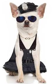 Chihuahua Halloween Costumes Release Halloweencostumes Unveils