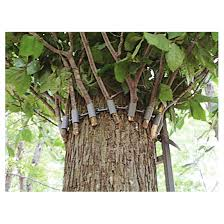 blinded hunting crow u0027s nest tree stand blind 232301 tree stand