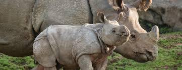 for grownups san diego zoo kids