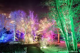 tree lights at the morton arboretum magical mister trees hitzeman photography